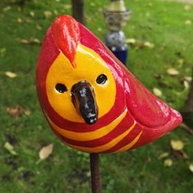 Kok, vogel oranje rood