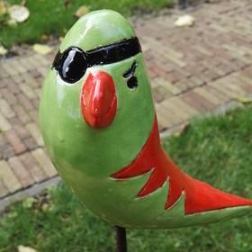 Kok, piraatvogel
